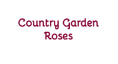 Country Garden Roses AdWords Management Case Study